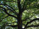 Ray Neiro 〜オリジナル音楽制作プロジェクト〜New session<br/>カバラ生命の木サウンド・オブ・ミュージック@茅ヶ崎ClayCoco